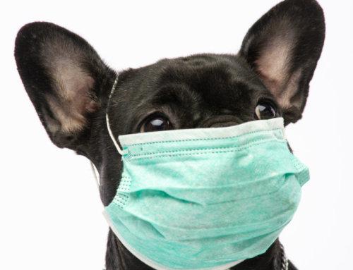 Coronavirus» das müssen Tierbesitzer beachten
